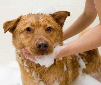 шампунь доктор з дьогтем для собак