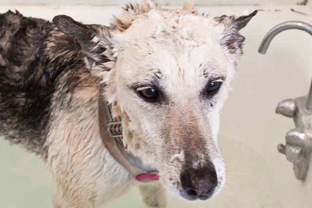шампунь доктор для собак ціна