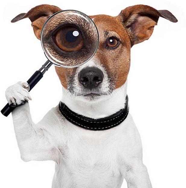 Фото - Собаки, які не линяють і не пахнуть