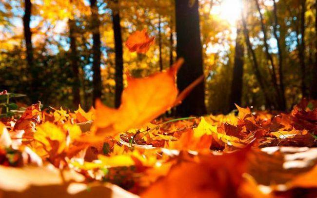 твір на тему осінній листопад