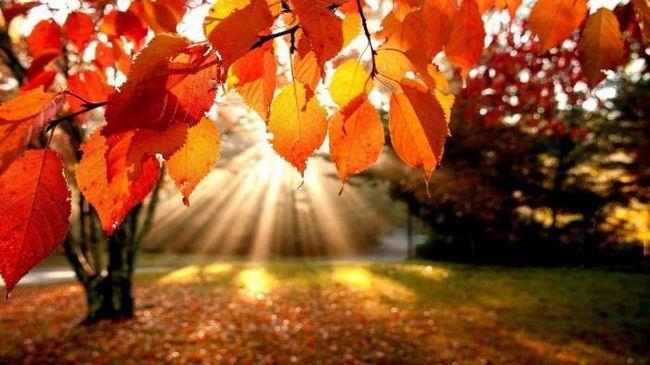опис осіннього листопаду