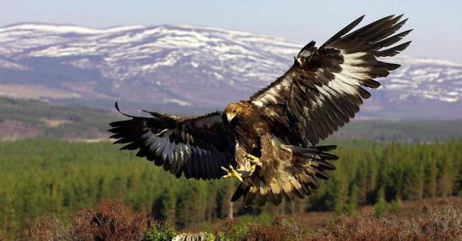 Фото - Такі різні птахи подмосковья