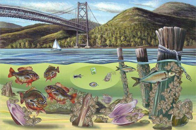 Фото - Види та приклади біогеоценозу. Біогеоценоз і екосистема