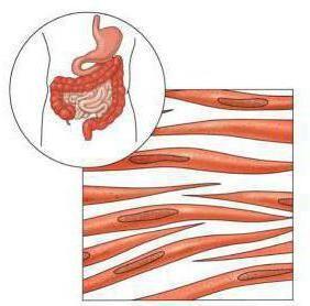 види м'язових тканин малюнки