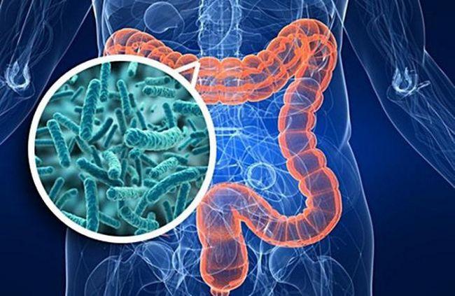 Фото - Вся правда про те, як кишкові бактерії впливають на здоров'я людини