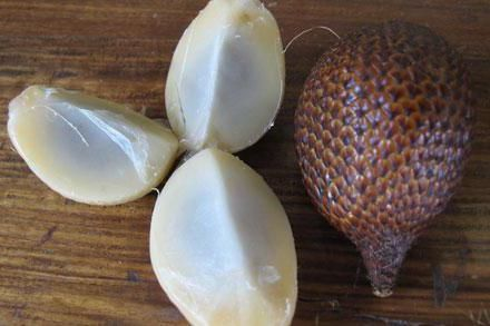 зміїний фрукт вирощування