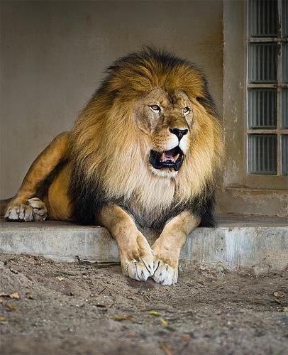 Фото - Зоопарк в Тюмені: загальна інформація