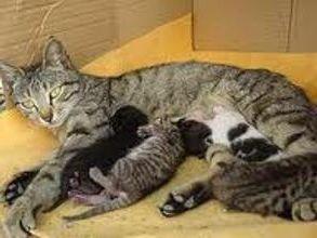 Фото - Чим годувати годує кішку?
