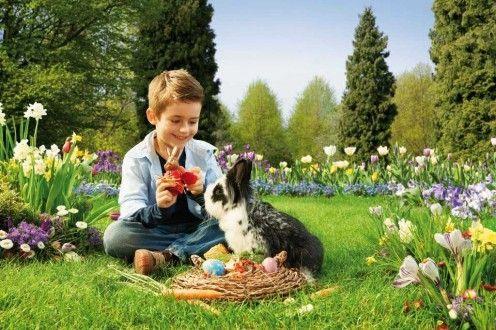 Фото - Чим годувати кроликів в домашніх умовах? Індивідуальний раціон