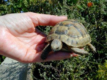 Фото - Чим годують сухопутних черепах? Основні правила
