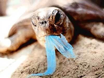 Фото - Що їсть черепаха: особливості годування