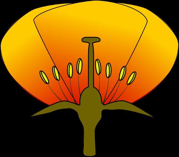 особливості будови квітки