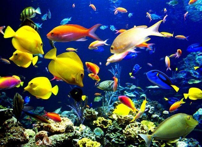 Фото - Фільтр для акваріума - гарантія краси і затишку домашніх будиночків для риб