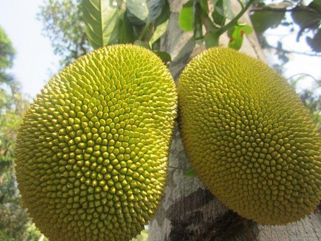 екзотичні фрукти назви