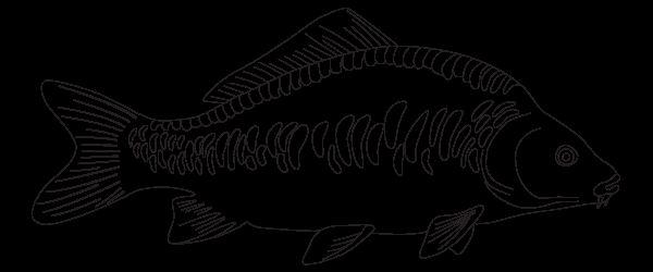 намалювати рибу