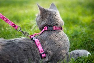 Фото - Як одягати шлею на кота: корисні поради