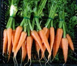Фото - Як правильно садити моркву - корисні поради