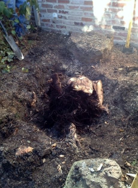 видалення коренів дерев