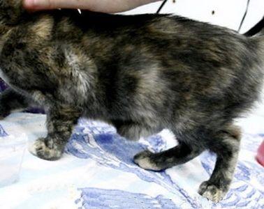 Фото - Якими можуть бути наслідки стерилізації кішки