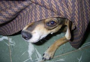 Фото - Яке заспокійливе для собак краще?