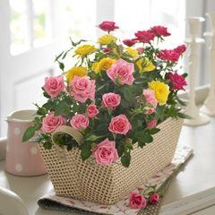 троянди види