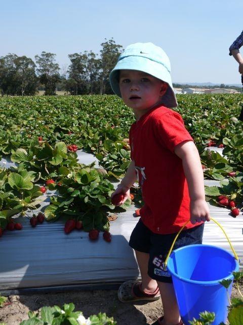 Фото - Коли можна давати дитині полуницю і чи можна взагалі?