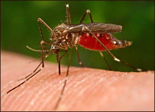 Фото - Комарині укуси у дітей: чим мазати