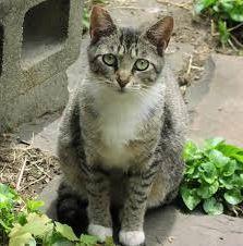 Фото - Кішки безпорідних можуть стати відмінними домашніми компаньйонами