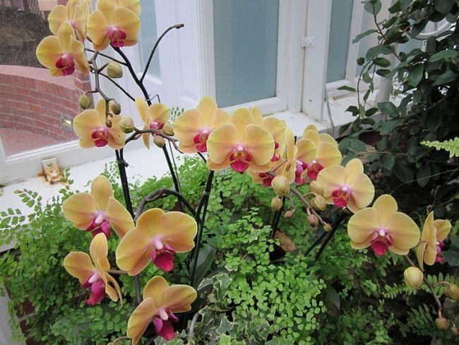 Фото - Улюблена орхідея відцвіла - що робити далі?