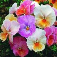 Багаторічні рослини
