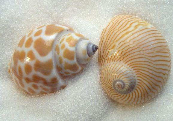 морські черепашки