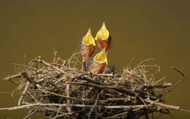 які птахи осілі