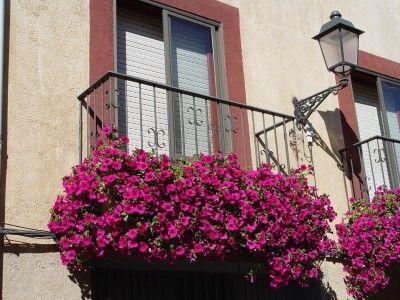 Фото - Петунія на балконі: вибір насіння і тонкощі вирощування
