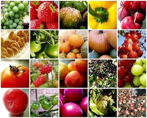 плоди овочів