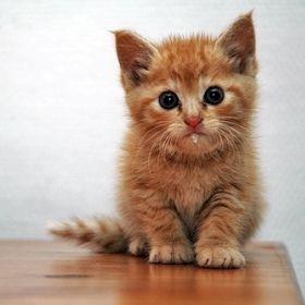 Фото - Чому у кота течуть слюні, і що робити, якщо власник помітив це