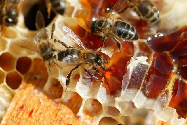 Фото - Поетичний продукт: вересковий мед
