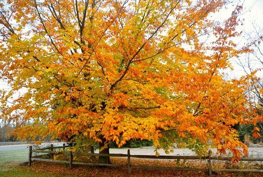 листя жовті