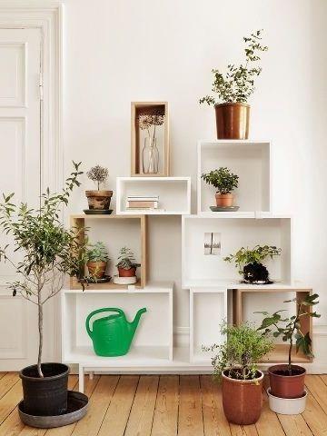 Фото - Стелажі для квітів - річ, необхідна в кожній квартирі