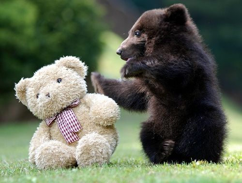 Фото - Віршик «Клишоногий ведмедик»: родом з дитинства