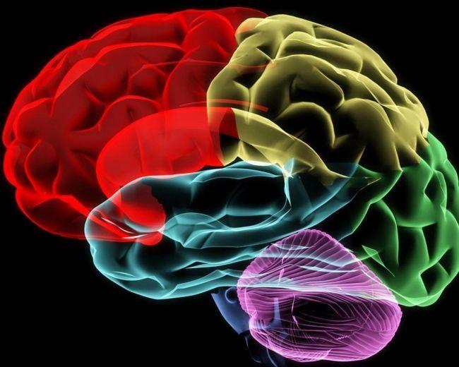 можливості людського мозку