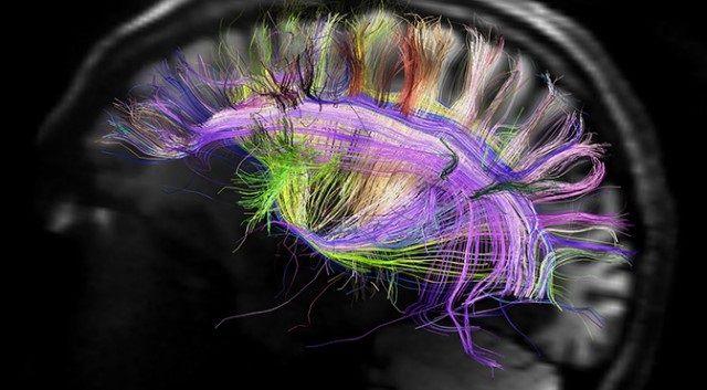 людський мозок особливості та можливості