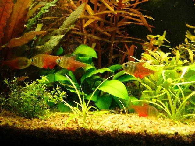 Фото - Такі різні і незвичайні тетри (рибки)