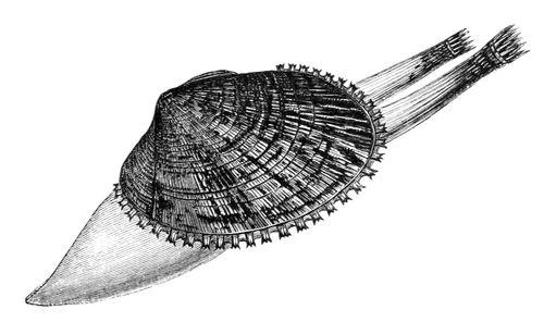 тип молюски класи молюсків