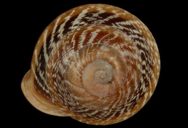цікаві факти про молюсків