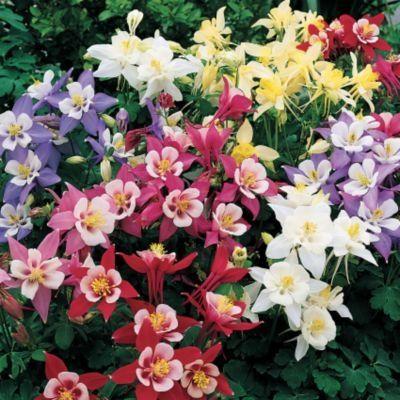 Дивовижні квіти