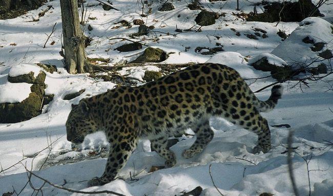 фонд дикої природи WWF