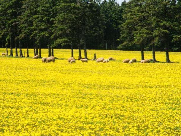 Квіти жовті