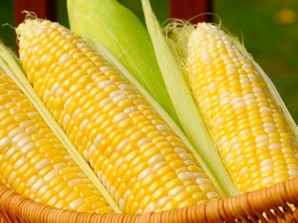 Фото - До чого сниться кукурудза: версії різних сонників
