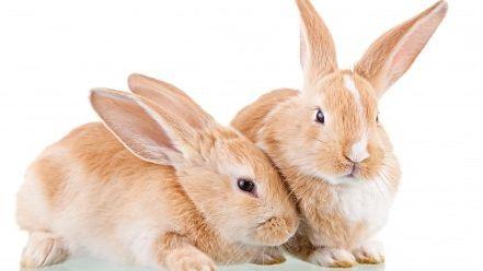 Фото - До чого сниться заєць або кролик? До чого сниться вбитий заєць?