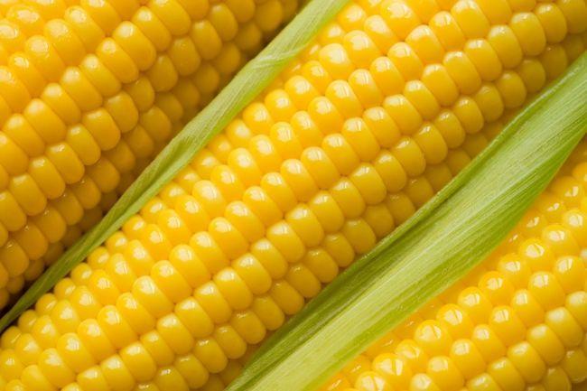 Фото - Кращі сорти кукурудзи: фото, опис